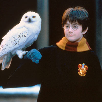 File:Harry-potter-owl.jpg