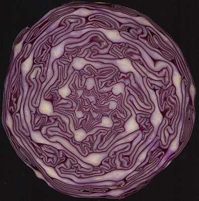 File:Red-cabbage-spiral.jpg